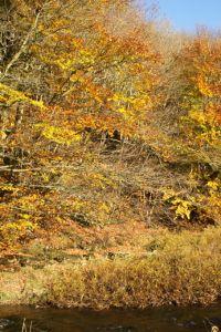 Late-autumn-colours