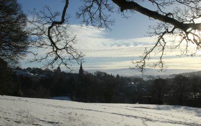 winter Alston