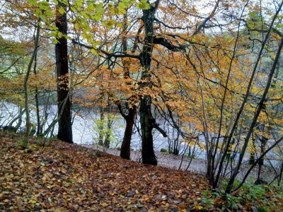 late autumn colours, Alston