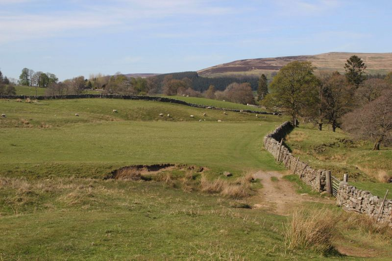 Pennine Way-gateway with lambs